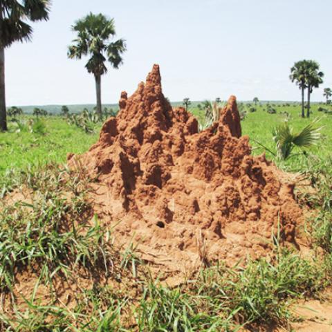 Termite Hotel