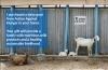 Dairy Goat ecard